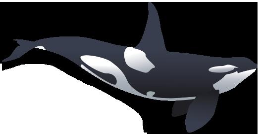 big-orca