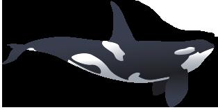 small-orca